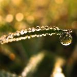 In the view of a drop . - 01 by T7-Productions