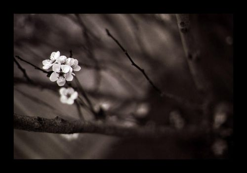 - Untitled by kebz