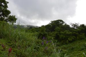 Sub tropical Forest of Martinique by A1Z2E3R