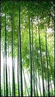 A forest of bamboo by sonicc