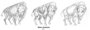 Animal Anatomy: Bison by 89ravenclaw