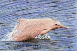 October - Indo-Pacific Humpback Dolphin by 8TwilightAngel8