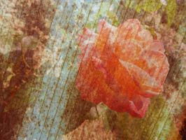 Grunge Rose Texture 01 by dknucklesstock