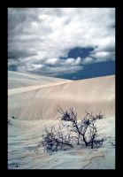 sand dunes-2 by jess1586