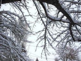 Snowy Branches - Day 152 by ninjakitty94