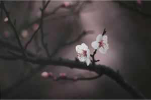 The Colors of Spring by ChiFeng-dA