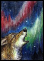ACEO - Polar Lights by Lupuna