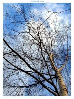 the sky through tree by planzman