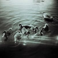 Stay Afloat by Vickstar