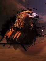 Eagle by Momez