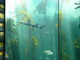 Kelp Forest 9 by Confussed-Stock