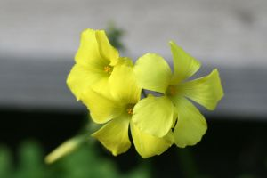 flower1 by KnB-Stock