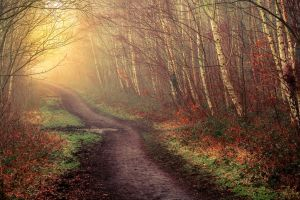 Woodland Path by kyleparr
