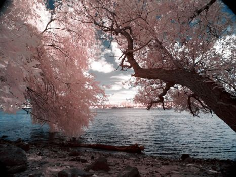 Infrared World by bamboomix