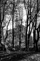 Church of the Forest by TheBigDaveC