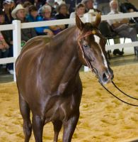 STOCK - 2014 Total Equine Expo-89 by fillyrox