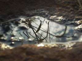Rock With Reflection by danx64