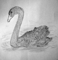 Swan by tomchristie22
