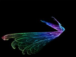 fibre optic peacok by dicrow