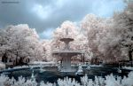 Silky Tree Infrared by ilimel