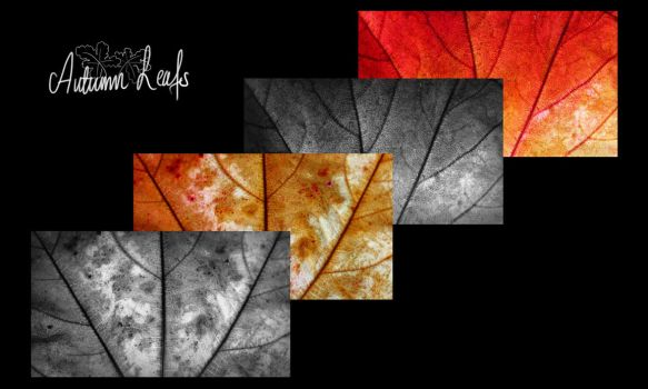 Wallpaper - Autumn Leafs by NightMeadow