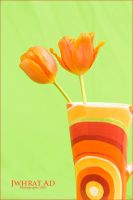 ORANGE Tulip-I by Jwhrat-Ad