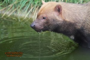 090810 Bush Dog 1 by InsaneGelfling