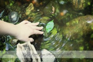 Leaf in the Stream by LLJPhotography