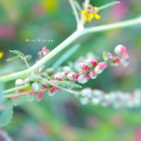 pink n green by Miss-NiNiNa