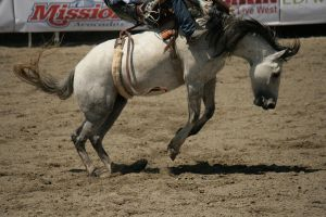 rodeo 14 by xbr0kendevotion