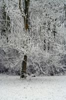winterland 16 by priesteres-stock