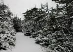 snow covered path 3 by LucieG-Stock