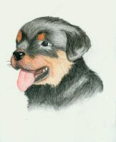 Rottweiler pup by LeahSims1
