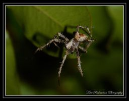 5mm spider by Purple-Dragonfly-Art