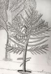 Tree by guto0906