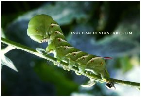 Caterpie by Tsuchan