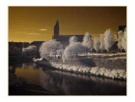 Paisley in Infrared I by paddimir