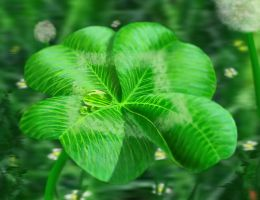 Four leaf clover II by incasent