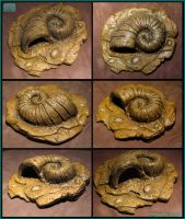Helix Fossil by CopperCentipede