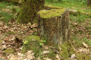 Forest Stock 048 by Malleni-Stock