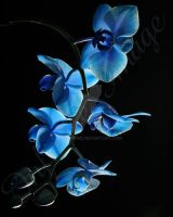 Blue Mystique Orchid Branch by Infinate Image by artsyhome