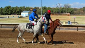 Racehorse Stock 23 by Rejects-Stock
