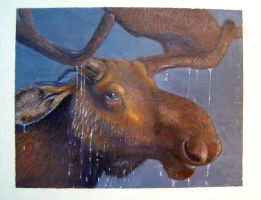 wet moose by KE-M72