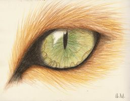 Lion eye by smixova