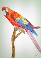 Parrot in Watercolour by AshizMagic