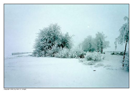 frozen trees - pt IV by crayz
