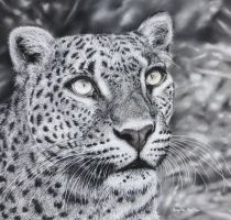 Leopard (Pastel Pencils) by AngelaMaySmith