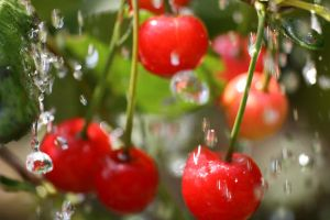 cherries in the rain by Gothic-Enchantress
