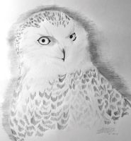 Hedwig by JadedDreams1