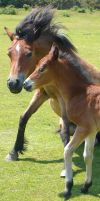Mother and Foal by Aura3107
